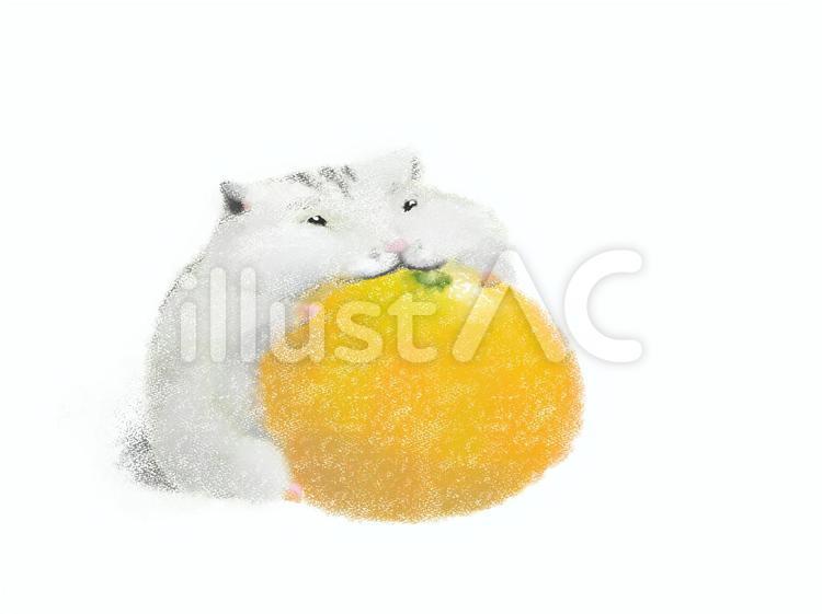 みかん ハムスター ハムスターはみかんやオレンジを食べられます!皮や種には注意が必要 |