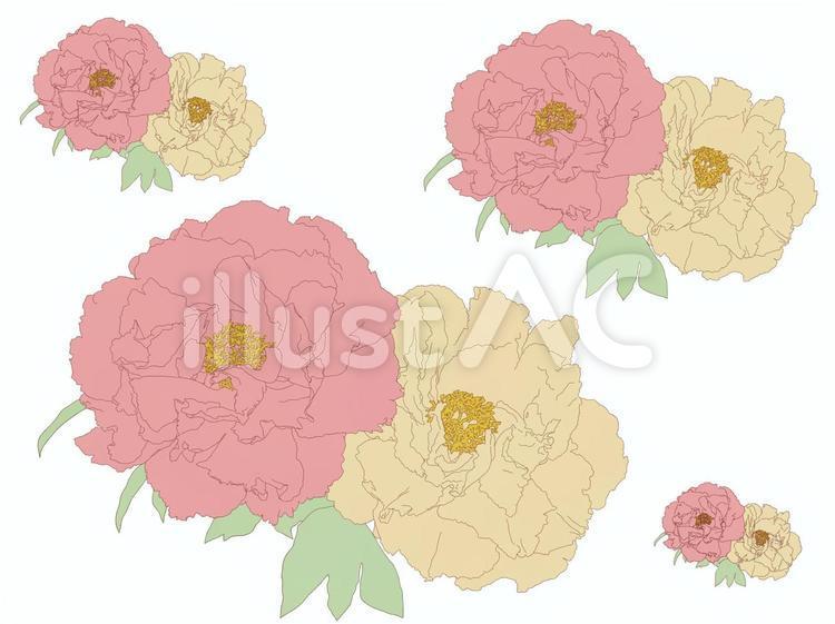 牡丹の花カットセット