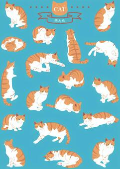 Cats (Real · Brown Tiger) 18 pose