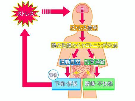 脳腸イラスト/無料イラストなら「イラストAC」