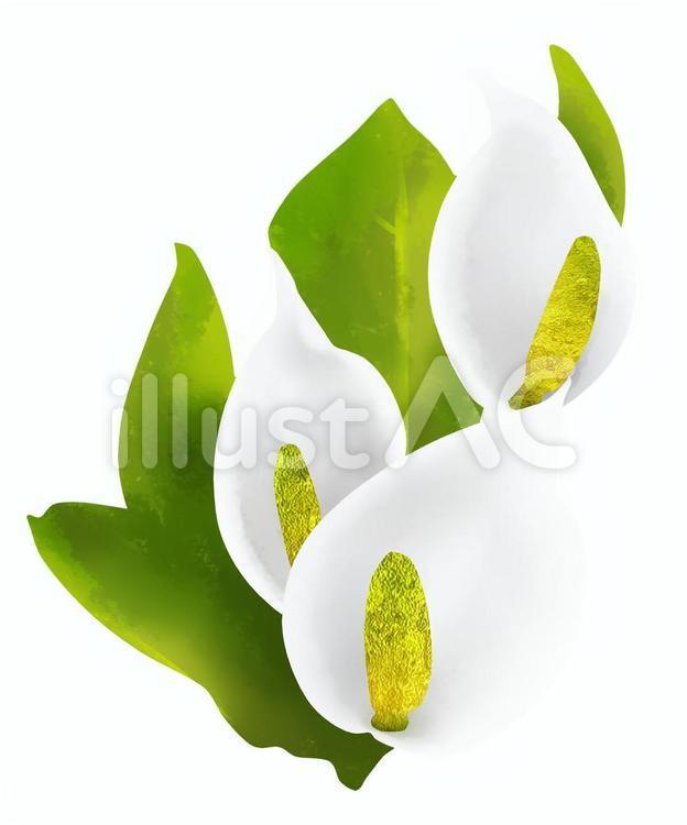 水芭蕉の花