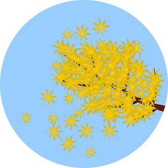 枫(黄色)