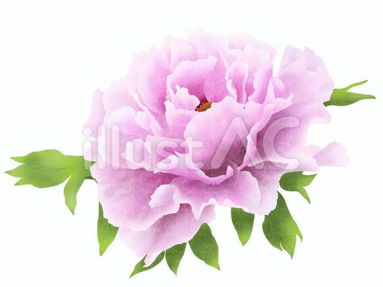 【フリーイラスト素材】牡丹の花(薄紫色)