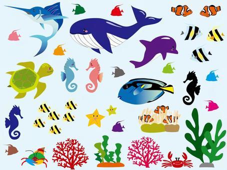 Sea creatures with no border line