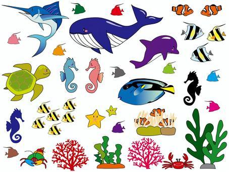 Sea creatures Borderline Yes