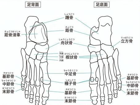 骨 の 名前 足 の 足のタイプ分類とメカニズム