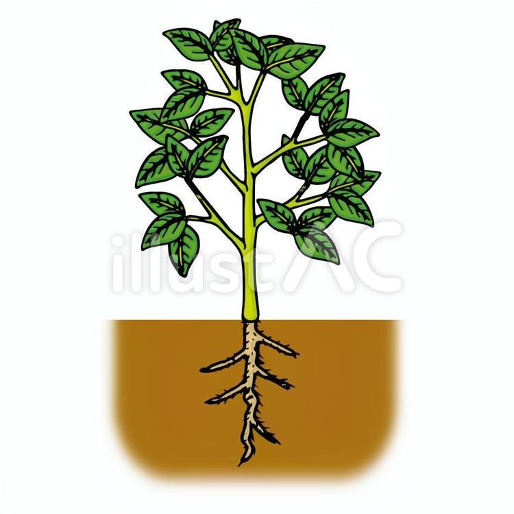 植物/葉/茎/根イラスト - No: 920074/無料イラストなら「イラストAC」