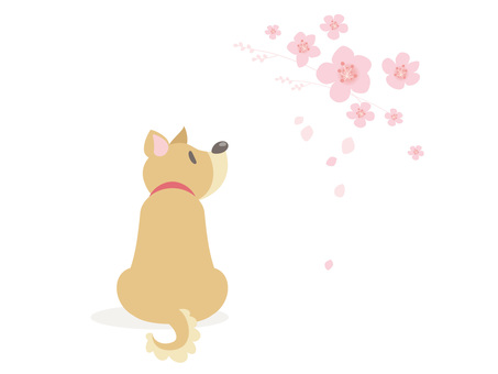 A dog that loves cherry blossoms
