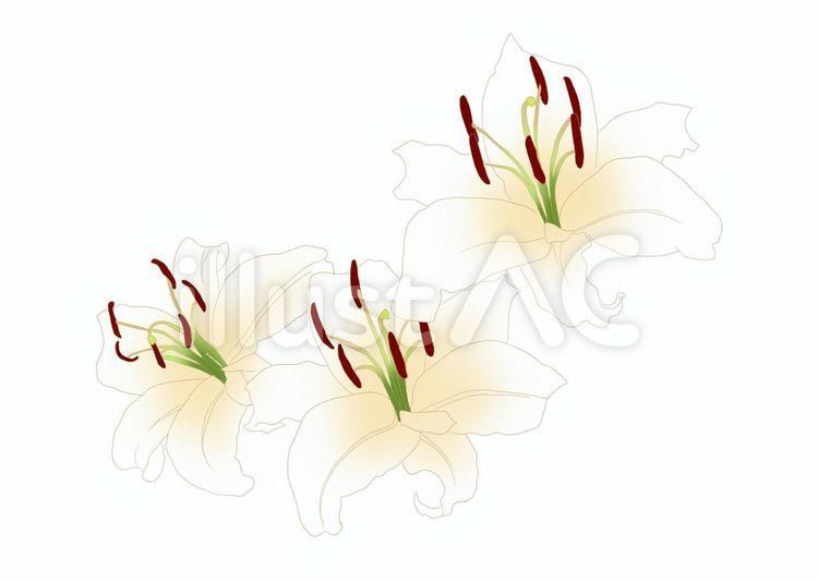 【フリーイラスト素材】百合の花