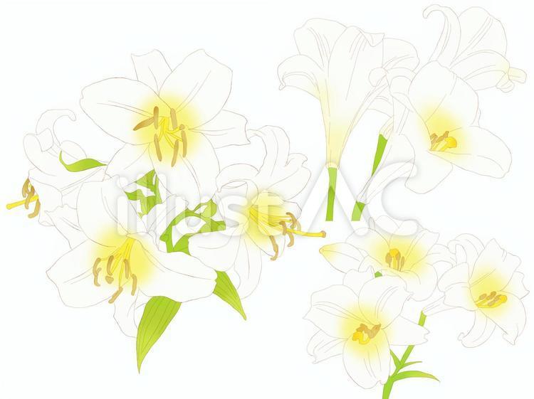 百合の花カットセット