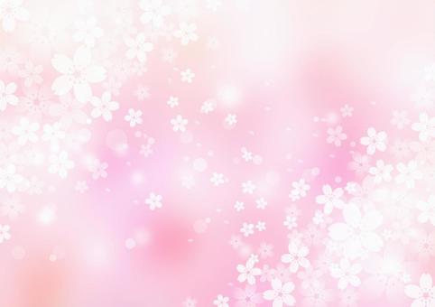 櫻花_粉紅色_蒼白的背景