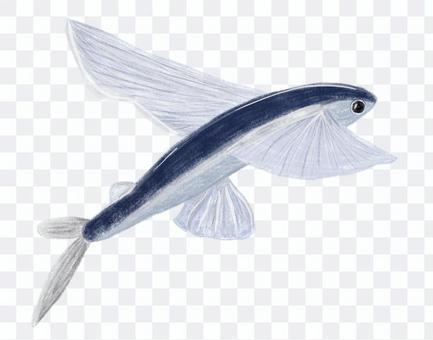 彩色鉛筆劃風格的飛魚
