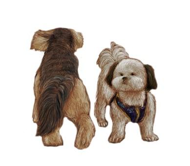 2 馬耳他犬