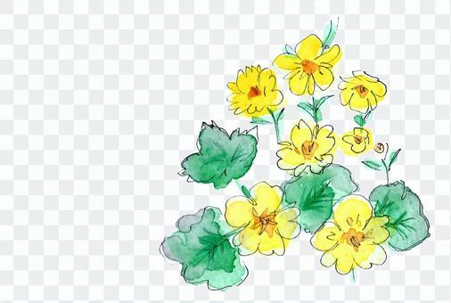 高山植物黃色花