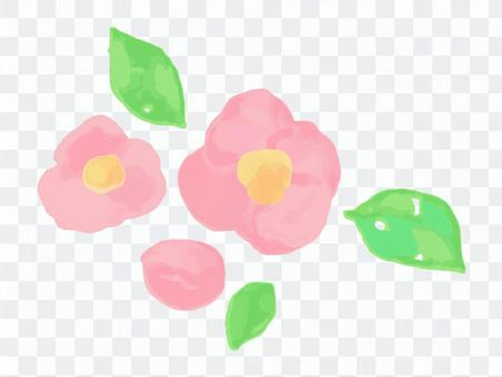 粉色山茶花水彩風格的插圖