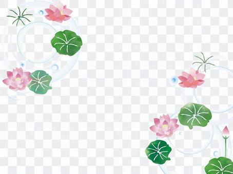 蓮花☆夏季參觀