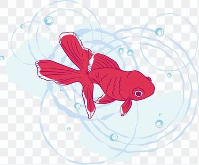 游泳金魚的例證