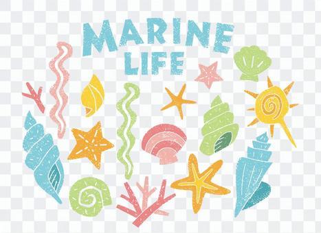 海の生物 貝
