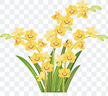 Western orchid cymbidium