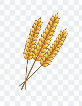 小麥的插圖