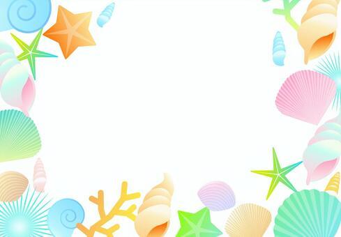 貝殼背景夏天