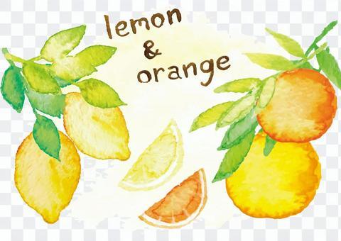 """""""水彩風格""""檸檬橙"""
