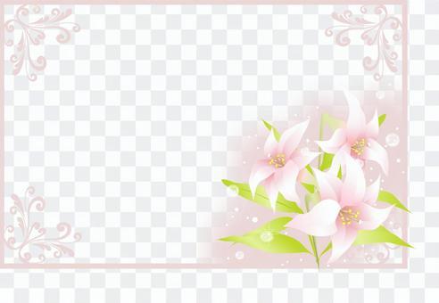 Shirayuri frame 1