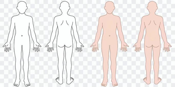 人體圖(圖式)