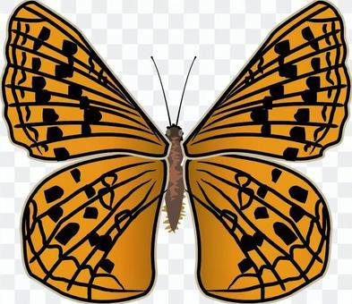 ウラギンヒョウモン タテハチョウ科 昆虫