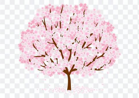 櫻桃樹材料116