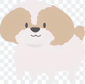可愛的西施犬