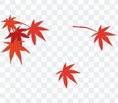 紅葉(楓葉)