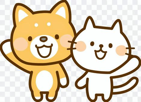 Shiba Inu and White Cat