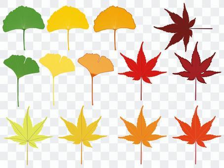 秋葉的葉子