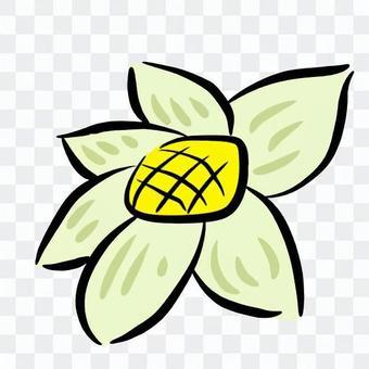 花(黃色)
