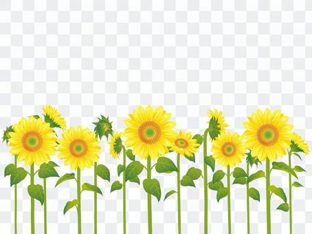Summer flower · Sunflower (sunflower) plural 03