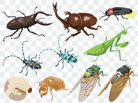 Animal_Insect_Set 1_無線