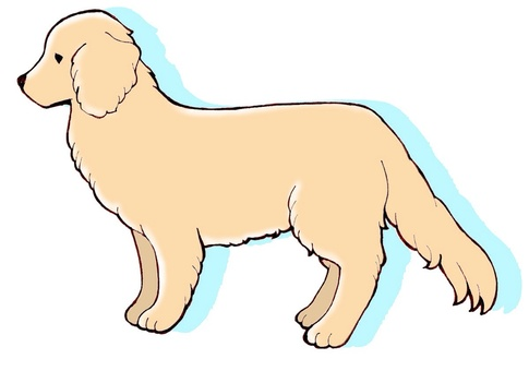 Dog series ① Golden retriever