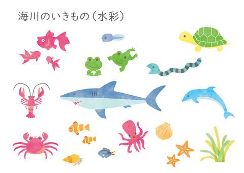 Umikawa creatures (watercolor)
