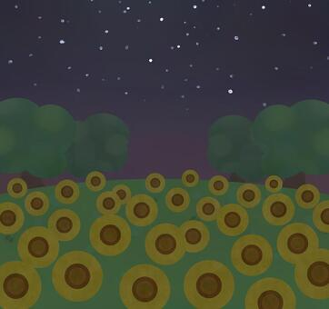 Field summer sunflower field night