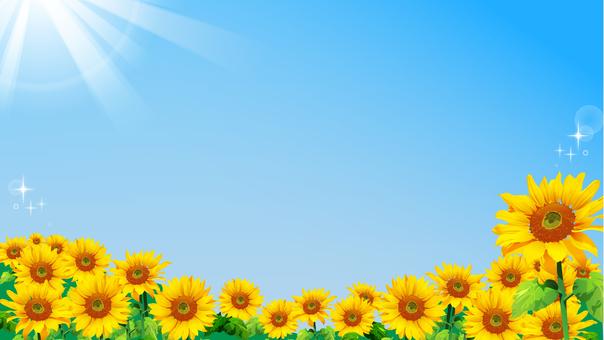 5 向日葵田-與太陽(視頻大小)
