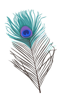 Peacock Feather 1