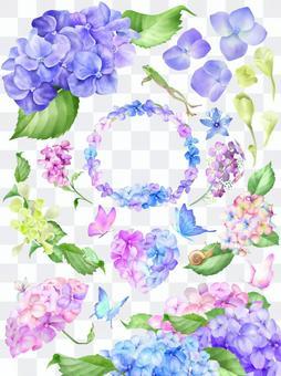 七彩繡球花系列