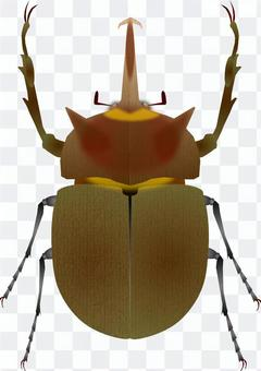 Beetle (elephant)