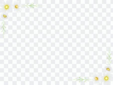 秋向け・コスモスのフレーム6白