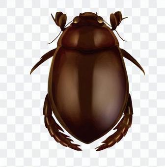潛水甲蟲1