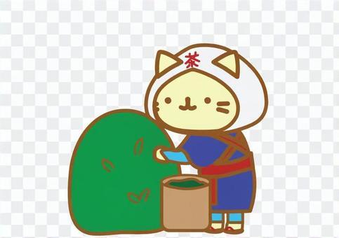 찻잎 따기 고양이 2