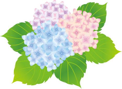 繡球花三種顏色
