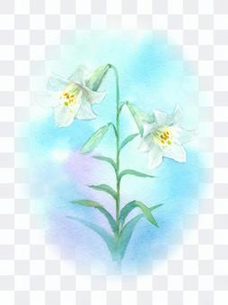 White lily drawing with transparent watercolor