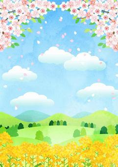 水彩風葉桜と菜の花の里山タテ
